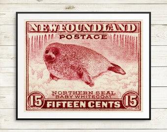 baby seal art, baby seal print, baby seal poster, newfoundland poster, newfoundland art, newfoundland prints, newfoundland canada, canadian