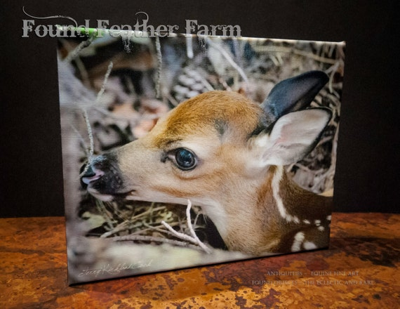 """Fine Art Photograph Giclee """"Tiny Newborn Fawn"""" on Canvas Signed by the Artist"""