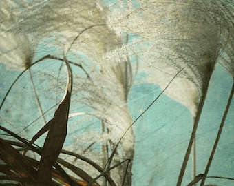 Nature Grass Photograph Whispy Grass Wall Art  Beige Teal Feathery Plumes Whimsical Dreamy Nature 8x10