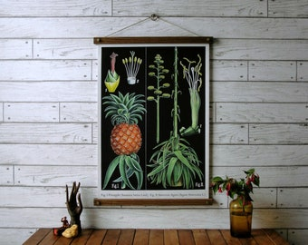 Pineapple Botanical Chart / Vintage Pull Down Chart Reproduction / Canvas Fabric Print / Oak Wood Poster Hangers with Brass / Wall Hanging