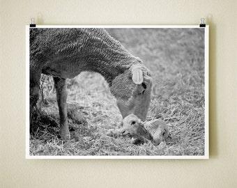 NEWBORN - 8x10 Signed Fine Art Photograph