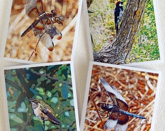 Bird and Dragonfly Nature Note Cards, Livermore California Nature Series, Blank Note Card, Photographic Art Hummingbird Woodpecker Dragonfly