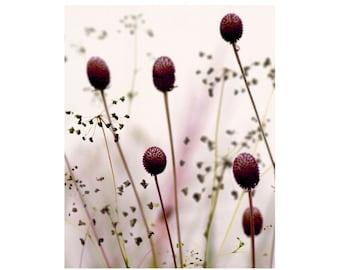 Wildflower Botanical Photograph Raspberry Fields Dreamy Nature Decor Print