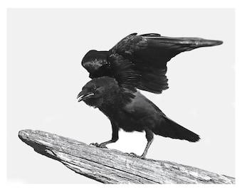 Crow Art Print, Bird Wall Art, Bird Print, Digital Art Print of Crow, Library Wall Art