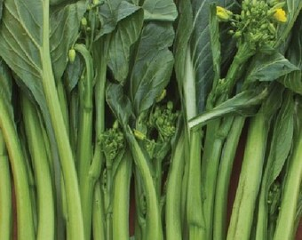 Organic non-gmo Mustard Greens  Jade Spring(F1)The incredible flavour will have you eating it raw, straight out of the garden or stirfried