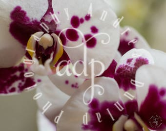 8x10 Orchid Photo