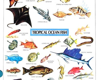 Vintage Dictionary Print - Tropical Birds, Tropical Ocean Fish - 1984 Vintage Book Page - 2 Sided - 11 x 8