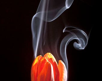 Smoking Flower Print Photograph