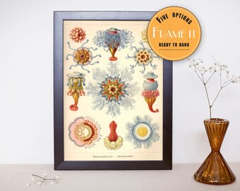 """Vintage illustration from Ernst Haeckel  - framed fine art print, sea creatures,sea life, 8""""x10"""" ; 11""""x14"""", FREE SHIPPING - 276"""