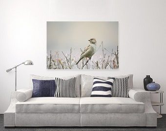 Bird-Photography on Canvas | Wall Art
