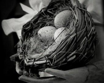 Fine Art Photography Still Life Photo Eggs Nest Holga Black & White Home Decor Sqaure Photo Archival Photograph