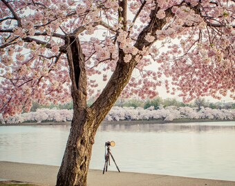 Cherry Blossom Photography - Washington DC Photo - Photo of Camera - Vintage, Soft, Pink, Teal - Cherry Blossom Festival - Landscape