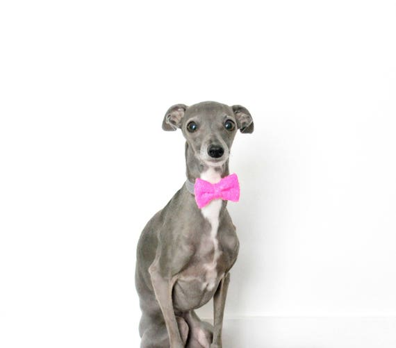 Dog Bow Tie Bowtie    Cat Neck Tie    Bowtie for Kitty    Pet Bow Tie    Cat Costume