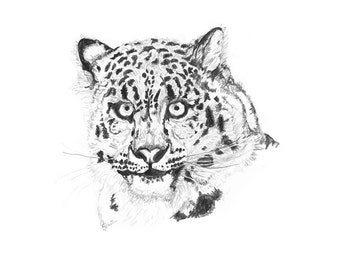 Snow Leopard Limited Edition Print Going, going, gone Series