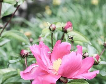 Une Fleur et une abeille, Photographie, Impression Beaux arts, Nature, Fleurs, décor mural, Edition limitée