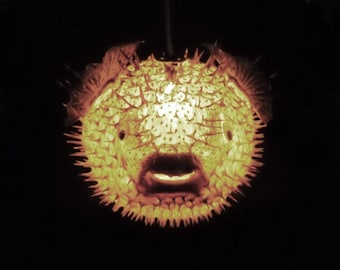 "BIG 13"" Hanging Puffer Fish Light Real Blowfish Lamp Taxidermy Animal Pendant Lighting Tiki Bar Nautical Decor LIghting"