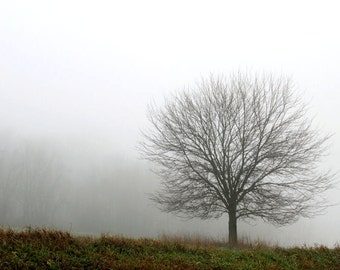 Tree in Fog, Nature Photography, Lone Tree, Brown and White, Matted Print,Ready to Frame, Wall Hanging