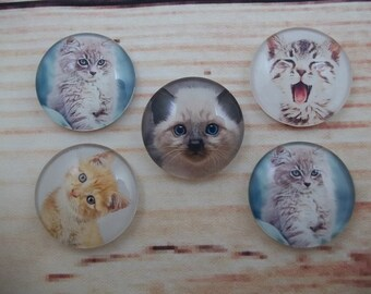 Cute Kitten Fridge Magnets, Glass Kitchen Magnets, Set of 5, Kitchen Decor, Hostess Gift, Housewarming Gift, Office Decor, Locker Magnet