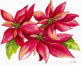 Poinsettia flower watercolor painting, Christmas flower