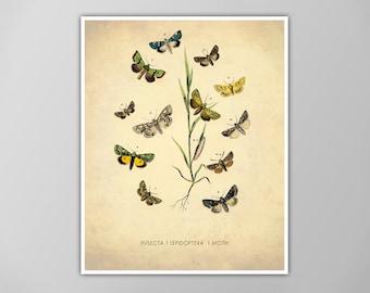 Moth Art Print, Moth Art Print, Natural History Poster, Natural History Print, Moth Species Art Print, Moth Print, Moth Illustration Print