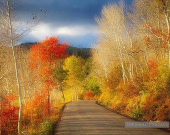 Fall Mountain Foliage, Fall Colors, Fall Photography, Wall Print, Home Decor, Office Decor, Road Less Travelled, Fall Mountain Road, Wasatch