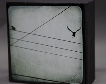 Crows Photograph on Wood Panel--Company's Coming--4x4 Fine Art