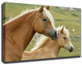HAFLINGER HORSE - Avelignese - Canvas/Poster Wall Art Pin Up HD Gallery Wrap Room Decor Home Decor Wall Decor