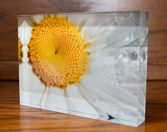 White Daisy on Acrylic Block