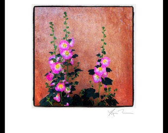 Pink Flowers & Adobe - Photographic Print or Canvas Wrap - Chicago Photography Fine Art - New Mexico - Santa Fe - home decor minimal pretty
