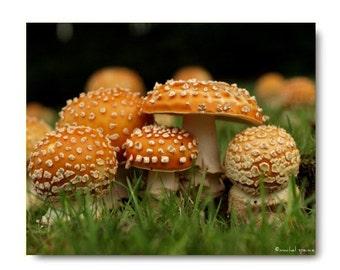 Amanita Mushroom Photograph Mushroom Print...Affordable Home Photography Prints Nature Photography Decor Nature Lover Woodland Scene