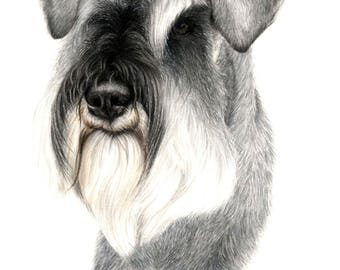 Custom Pet Portrait, SCHNAUZER , Custom pet drawing, animal portrait, pet portrait , dog portraits, personalized pet