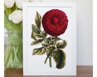 "Vintage illustration of Dahlia - framed fine art print, flower art, home decor 8""x10"" ; 11""x14"", FREE SHIPPING - 248"