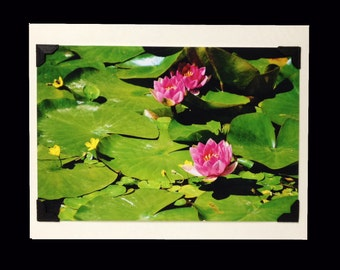 PHOTO GREETING CARD, nature photography, blank card, photo note card, birthday card, special occasion note card, Japanese Decor, , lily pad