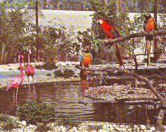 Set of 2 Vintage  Sunken Gardens, St. Petersburg, Florida. Stamped Postcards 1973
