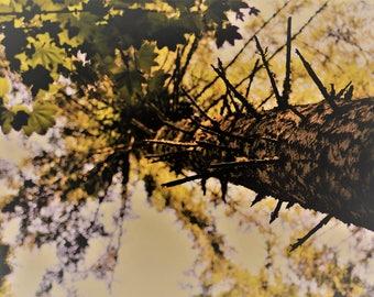 Spruce Tree Photography