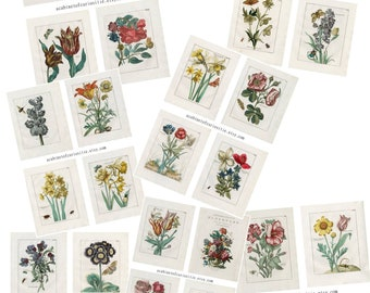 Floral  and Insects Ephemera Mix Junk Journal  Images Seven PDF Printable Sheets 8 1/2 x 11 Pinks Reds Blues Color