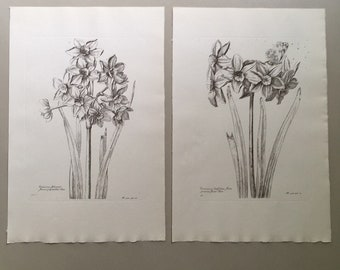"Vintage botanical flower prints 12""x8"""
