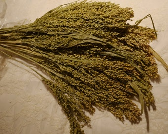 Dried Seeded Grass, Seeded Grass, Green Seeded Grass