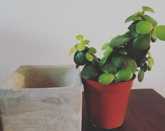 Plant of the month Club - 1 plant & 1 plant accessory *monthly subscription box* plant lover gift*