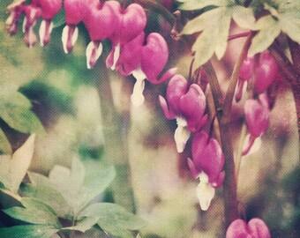 Frühling-Blumen-Foto - Dancing blutenden Herzen - 8 x 10 Fine Art print - Frühling Hütte chic Rosa grün Elfenbein Blume Wohnkultur strukturiert