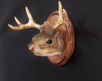 Squirrel with antlers taxidermy shoulder mount