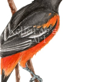 Giclee Baltimore Oriole Watercolor Painting, SongBird Art