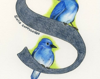 Avian Alphabet S