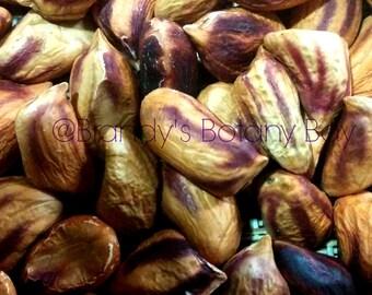 10 Wild Jungle Peanut Seeds