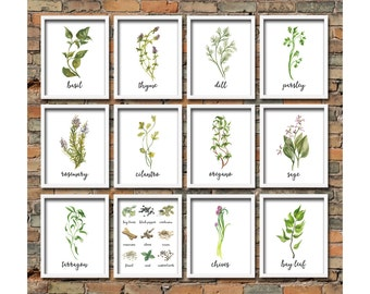 Watercolor Herb Printables Set Kitchen Herb Printable Wall Art Herb Kitchen Decor Herb Prints Set Kitchen Herb Print Set Botanical Herb Art