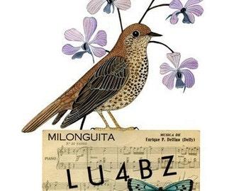 Bird No. 29