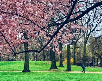 Winter is back in Central Park - April 15, 2018