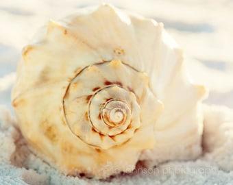 seashell photography, beach cottage decor, white wall art, beach wall art, beach decor, living room wall art, macro, nature photography