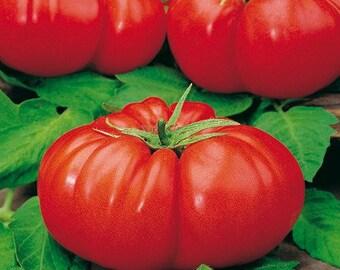 Giant tomato seeds