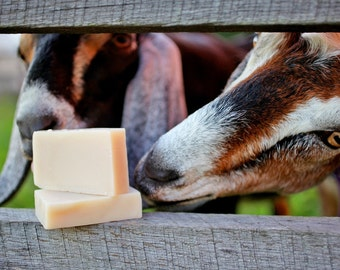 Goat's Milk Soap - natural soap made with honey and beeswax